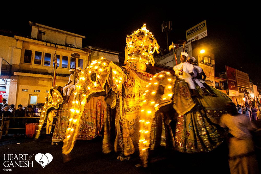 Elephants of all sizes take part in the Kandy Perahera